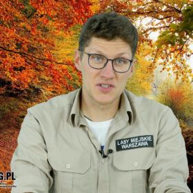 """Bartosz Popczyński opowiada, jak wygląda las w październiku i co dzieje się w tym miesiącu w świecie przyrody. Cykl """"Rok w lesie"""" realizujemy we współpracy z Centrum Edukacji Przyrodniczo-Leśnej Lasów Miejskich w Warszawie"""